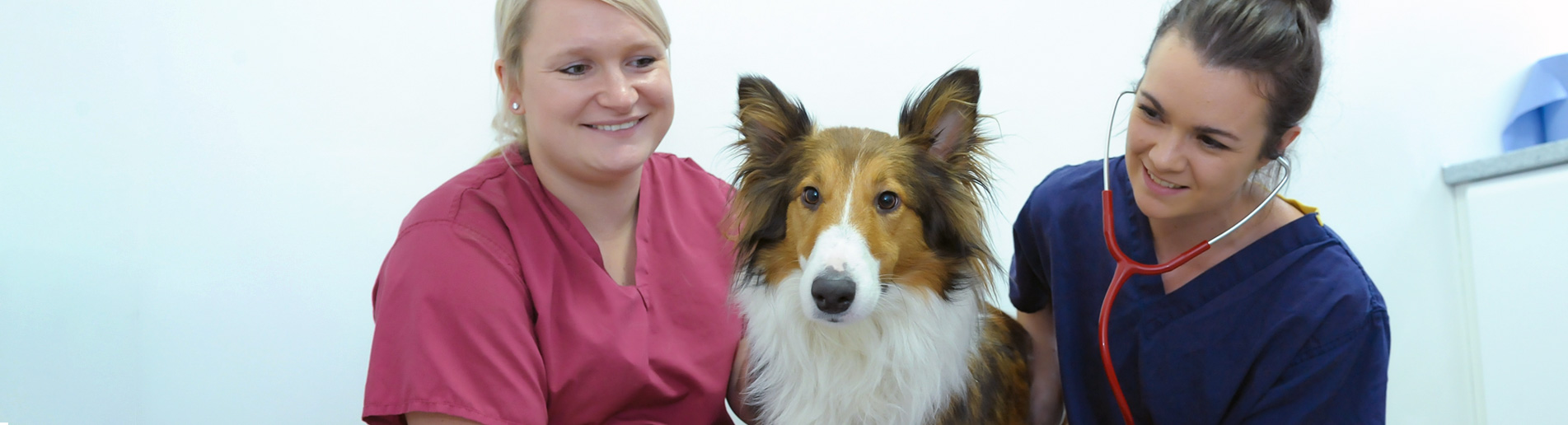 Orthopaedic and spinal veterinary referral centre in Cumbria