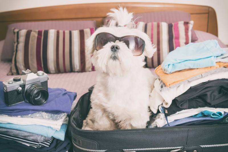 Act now if taking pets abroad after Brexit