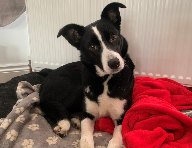 nell-at-home-kentdale-vets