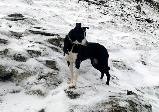 nell-in-the-snow